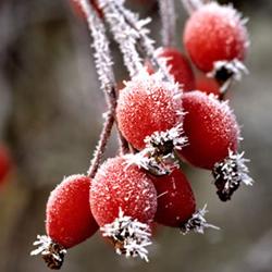 winterharte-pflanzen